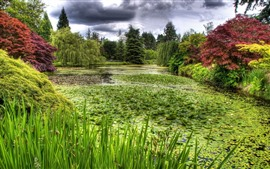 Preview wallpaper Swamp, plants, grass, trees, green, pond