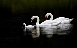 Preview wallpaper Three swans, lake, black background