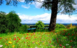 Preview wallpaper Tree, green grass, many flowers, bench, spring