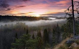 Árvores, nevoeiro, vista superior, céu, nascer do sol, outono