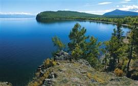 Arbres, lac, eau claire, paysages naturels