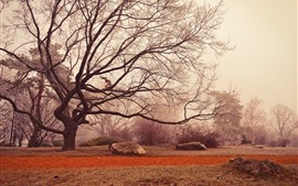 Preview wallpaper Trees, twigs, fog, morning, autumn