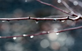 Twigs, water droplets, hazy