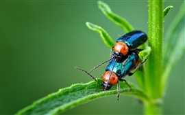 Two beetles, green plants