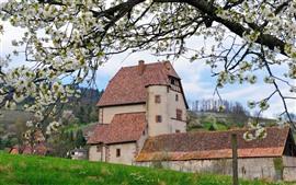 Aldeia, casa, flores brancas florescem, primavera