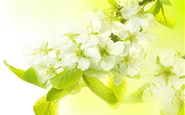 Preview wallpaper White apple flowers, green leaves, hazy background