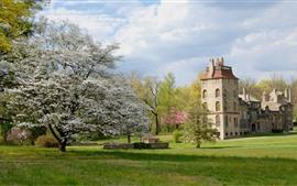 Flores brancas florescem, árvores, castelo, grama