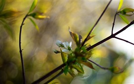 Preview wallpaper White flowers bloom, twigs, leaves, hazy