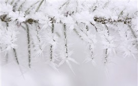 Preview wallpaper Winter, twigs, ice crystal, snow