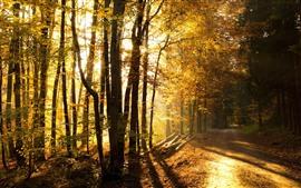 미리보기 배경 화면 가, 태양 광선, 빛, 경로, 나무