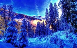 Красивая зима, снег, деревья, горы, туман