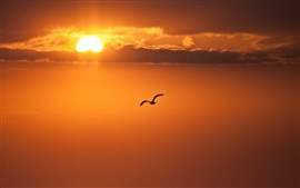 Preview wallpaper Bird flying in sky, sunset, clouds