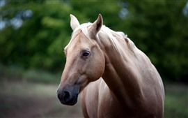Preview wallpaper Brown horse, face, head