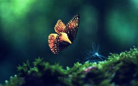 Preview wallpaper Butterfly flying, green grass