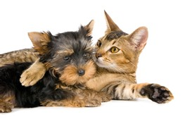 Cat and dog, white background