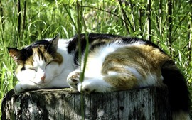 Cat sleeping, stump, grass