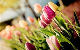 Preview wallpaper Colorful tulips, hazy, glare