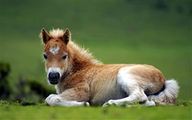 Preview wallpaper Cute pony, rest, grass, horse