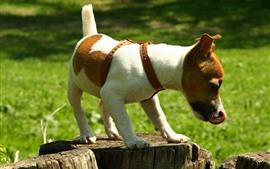 Dog, stump