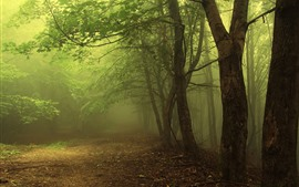 Preview wallpaper Fog, trees, path, forest, green, morning