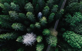 Forest, trees, road, top view