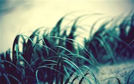 Grass leaves, wind, dusk