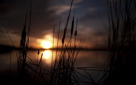 Hierba, juncos, lago, puesta de sol