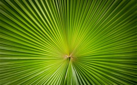 Preview wallpaper Green palm tree leaf, sector