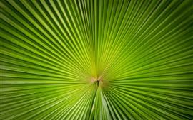 Зеленый лист пальмы, сектор