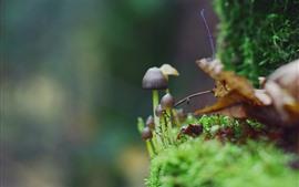 Маленький гриб, зеленый мох