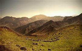 Много овец, горы