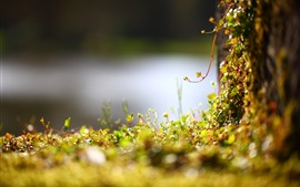 Moss, plants, hazy