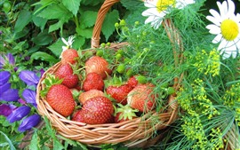 Preview wallpaper One basket fresh strawberries, flowers
