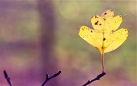 하나의 노란 잎, 나뭇 가지, 흐릿한
