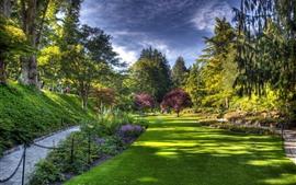 Парк, газон, деревья
