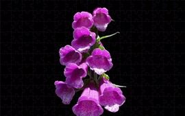 Preview wallpaper Pink bell flowers