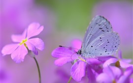 Preview wallpaper Pink flowers, butterfly, wings