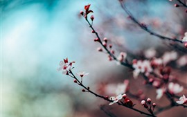 Preview wallpaper Pink sakura bloom, twigs, spring