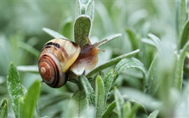 Preview wallpaper Snail, green plants leaves