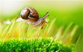 Preview wallpaper Snail walking on grass