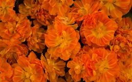 Некоторые оранжевые цветы