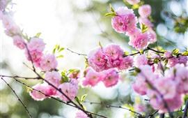 Spring, pink peach flowers bloom, hazy