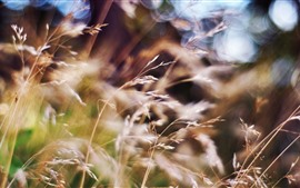 Preview wallpaper Summer, grass, hazy