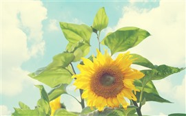Preview wallpaper Summer, sunflowers, glare, sunshine