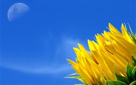 Preview wallpaper Sunflower, blue sky, moon