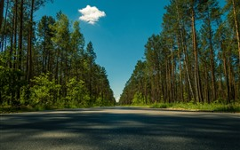 Trees, road, shadow, summer, blue sky