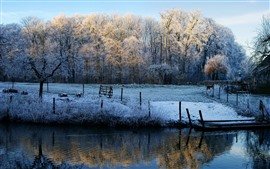 Winter morning, trees, river, snow, frost