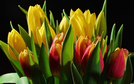 Preview wallpaper Yellow and red tulips, bouquet, black background