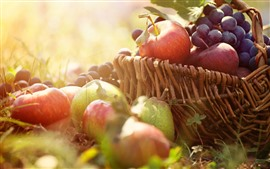 Apples, pears, grapes, basket, sunshine