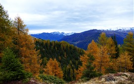 Autumn, mountains, trees, sky, clouds